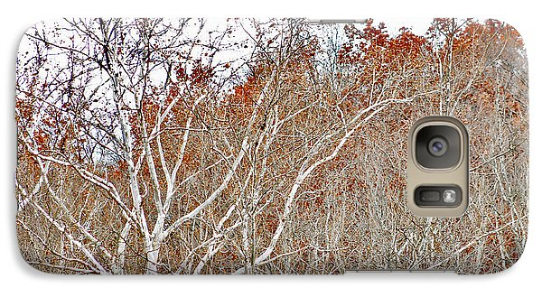 Galaxy Case featuring the photograph Autumn Sycamores by Bruce Patrick Smith