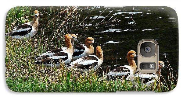 Galaxy Case featuring the photograph Avocets by Sam Rosen