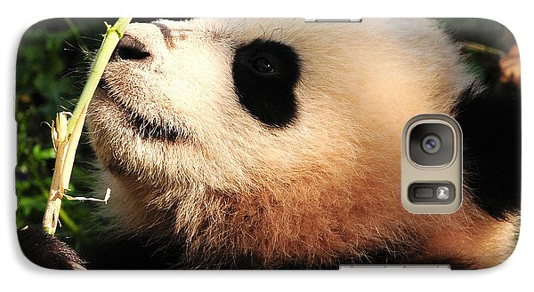 Galaxy Case featuring the photograph Baby Bear Bamboo Inspection by Olivia Hardwicke