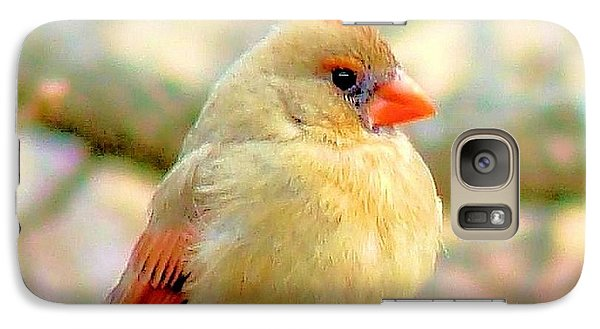Galaxy Case featuring the photograph Baby Female Cardinal by Janette Boyd