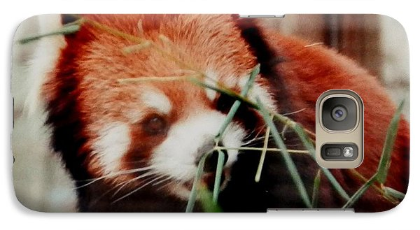 Galaxy Case featuring the photograph Baby Red Panda Bear by Belinda Lee