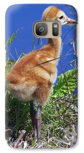Galaxy Case featuring the photograph Baby Sandhill Crane 064  by Chris Mercer