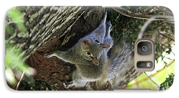 Galaxy Case featuring the photograph Baby Squirrel On The Loose by Trina  Ansel