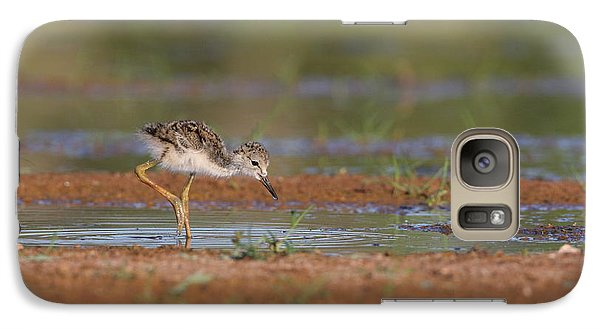 Galaxy Case featuring the photograph Baby Stilt Out Exploring  by Ruth Jolly