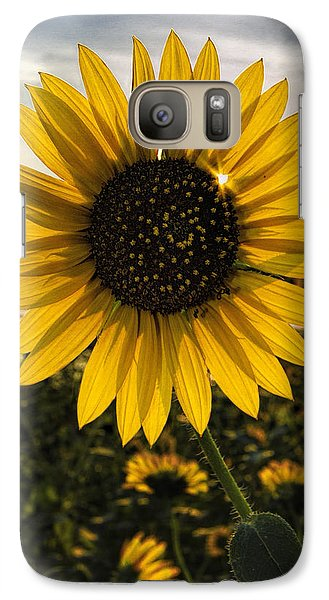 Galaxy Case featuring the photograph Backlit Sunflower by Rob Graham