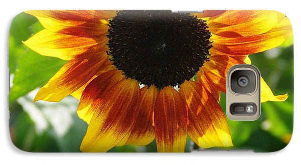 Galaxy Case featuring the photograph Backlit Sunflower by Sheila Byers