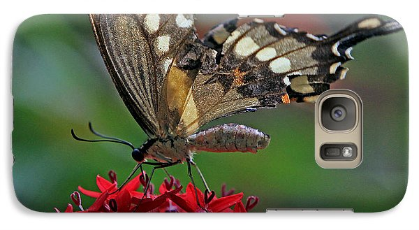 Galaxy Case featuring the photograph Backlit Swallowtail by Larry Nieland