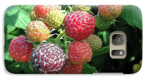 Galaxy Case featuring the photograph Fruit- Black Raspberries - Luther Fine Art by Luther Fine Art