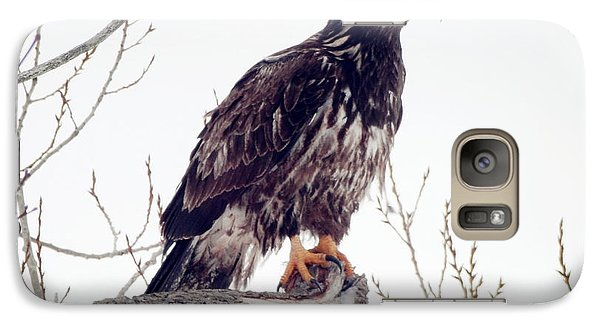 Galaxy Case featuring the photograph Bald Eagle by Zinvolle Art
