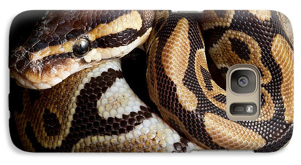 Ball Python Python Regius Galaxy S7 Case by David Kenny