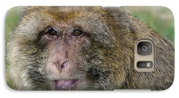 Barbary Macaque Galaxy S7 Case by Nigel Downer