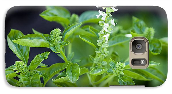 Galaxy Case featuring the photograph Basil With White Flowers Ready For Culinary Use by David Millenheft