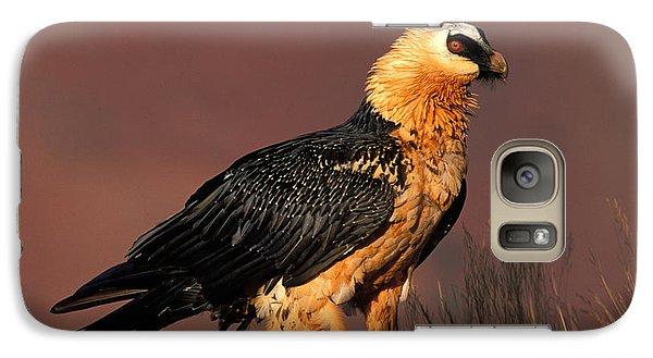Bearded Vulture Or Lammergeier Galaxy S7 Case