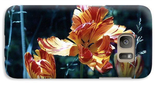 Galaxy Case featuring the photograph Gorgeous Tulip by Phyllis Kaltenbach