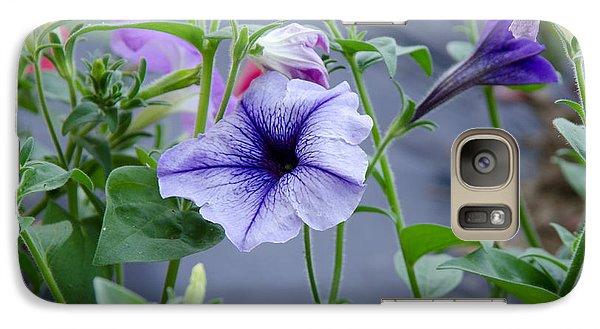 Galaxy Case featuring the photograph Beautiful Petunias by Wilma  Birdwell