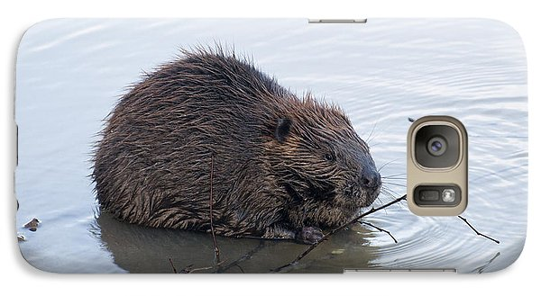 Beaver Chewing On Twig Galaxy S7 Case