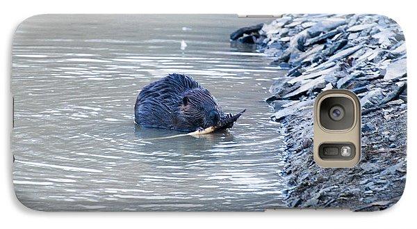 Beaver Chews On Stick Galaxy S7 Case by Chris Flees