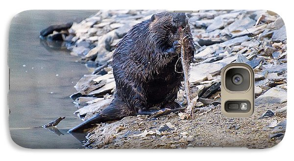 Beaver Sharpens Stick Galaxy S7 Case by Chris Flees