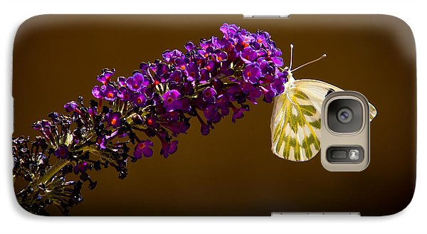 Galaxy Case featuring the photograph Beckers On Butterfly Bush Sparks Nevada by Janis Knight