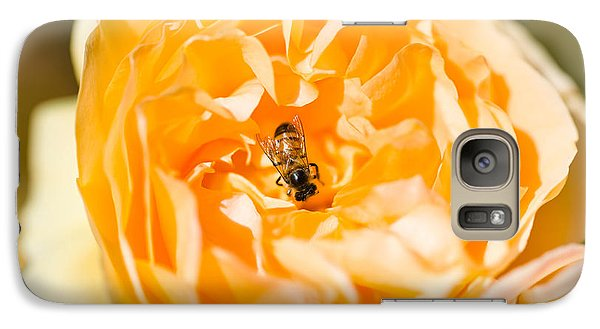 Bee Pollinating A Yellow Rose, Beverly Galaxy S7 Case by Panoramic Images