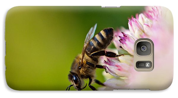 Galaxy Case featuring the photograph Bee Sitting On A Flower by John Wadleigh
