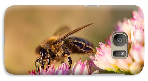 Galaxy Case featuring the photograph Bee Sitting On Flower by John Wadleigh