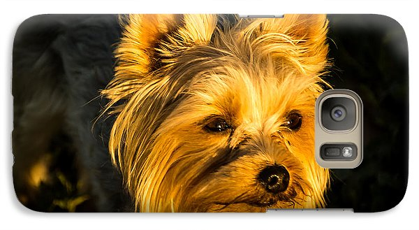 Galaxy Case featuring the photograph Bella The Wonder Dog by Jay Stockhaus