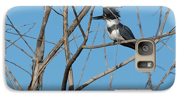 Belted Kingfisher 4 Galaxy Case by Ernie Echols