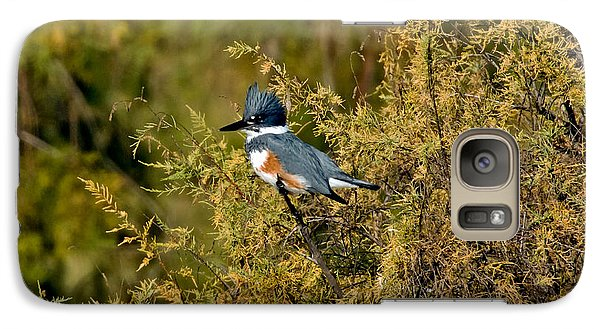 Belted Kingfisher Female Galaxy Case by Anthony Mercieca