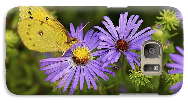 Galaxy Case featuring the photograph Best Friends - Sulphur Butterfly On Asters by Jane Eleanor Nicholas
