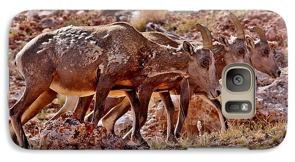 Galaxy Case featuring the photograph Bighorn Canyon Sheep Trio by Janice Rae Pariza