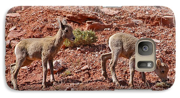Galaxy Case featuring the photograph Bighorn Canyon Sheep Wyoming by Janice Rae Pariza