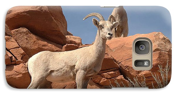 Galaxy Case featuring the photograph Bighorn Ewes by Jeff Cook