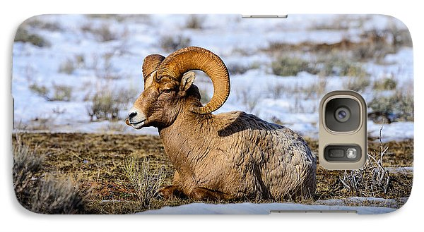 Galaxy Case featuring the photograph Bighorn Sheep by Greg Norrell