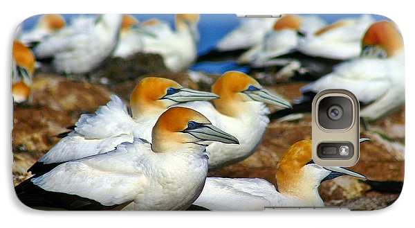 Galaxy Case featuring the photograph Bird Colony Australia2 by Henry Kowalski