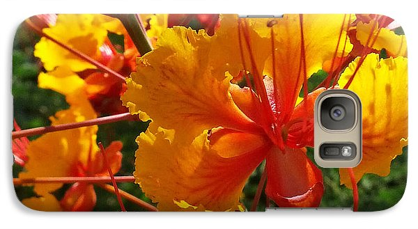 Galaxy Case featuring the photograph Bird Of Paradise by Suzanne Silvir