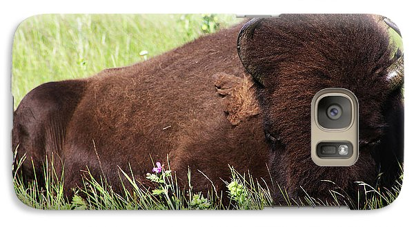 Galaxy Case featuring the photograph Bison Nap by Alyce Taylor