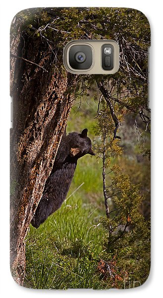 Galaxy Case featuring the photograph Black Bear In A Tree by J L Woody Wooden