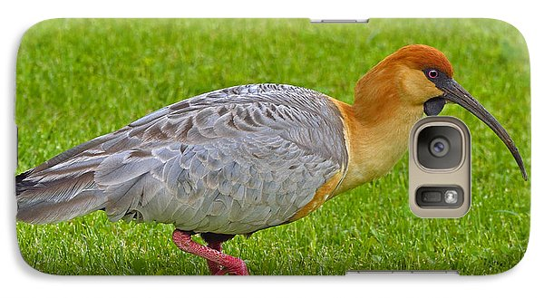 Black-faced Ibis Galaxy Case by Tony Beck