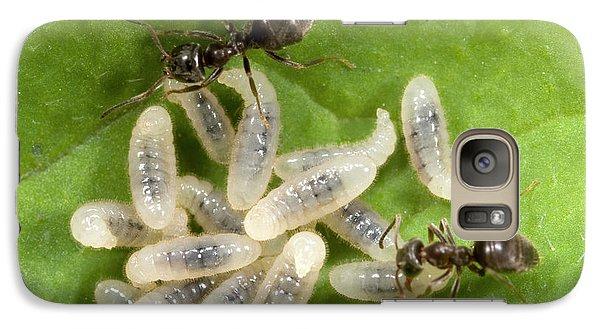 Black Garden Ants Carrying Larvae Galaxy S7 Case
