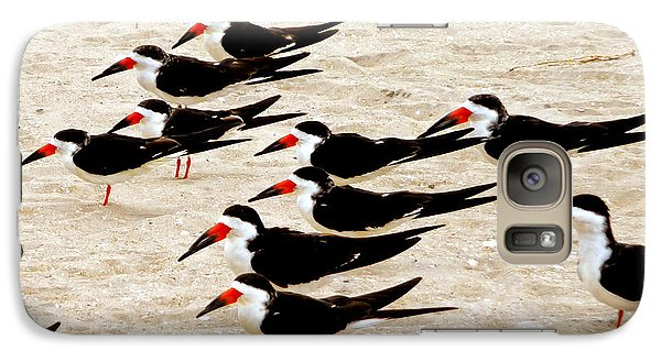 Galaxy Case featuring the photograph Black Skimmers On The Beach by Jim Whalen