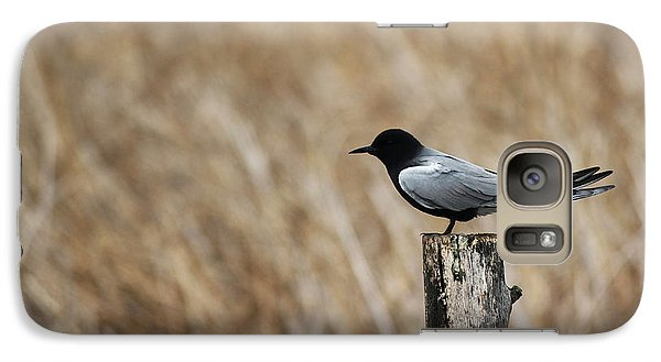 Galaxy Case featuring the photograph Black Tern by Ryan Crouse