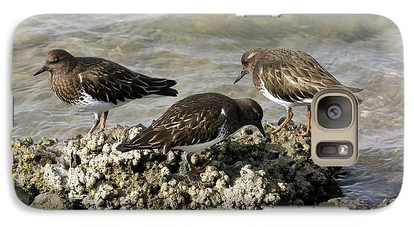 Black Turnstones Feeding Galaxy S7 Case