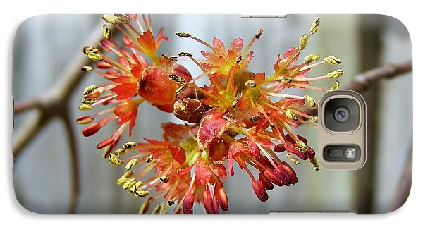 Galaxy Case featuring the photograph Blooming Buds by Kelly Nowak