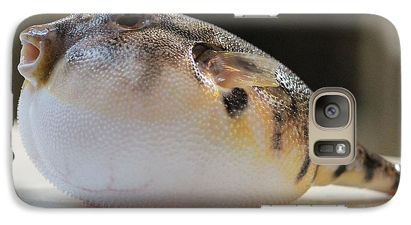 Galaxy Case featuring the photograph Blowfish 2 by Cynthia Snyder