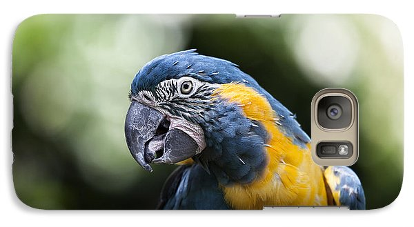 Blue And Gold Macaw V5 Galaxy Case by Douglas Barnard