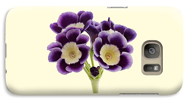 Galaxy Case featuring the photograph Blue Auricula On A Cream Background by Paul Gulliver