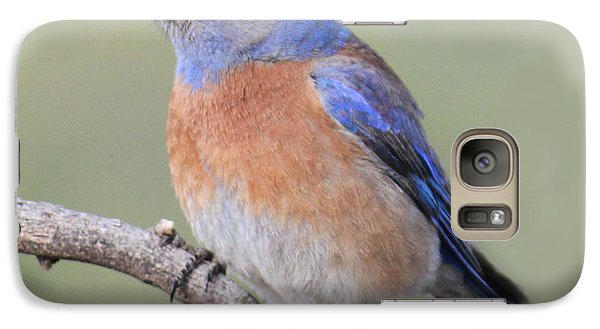 Galaxy Case featuring the photograph Blue Bird At Sedona by Debbie Hart