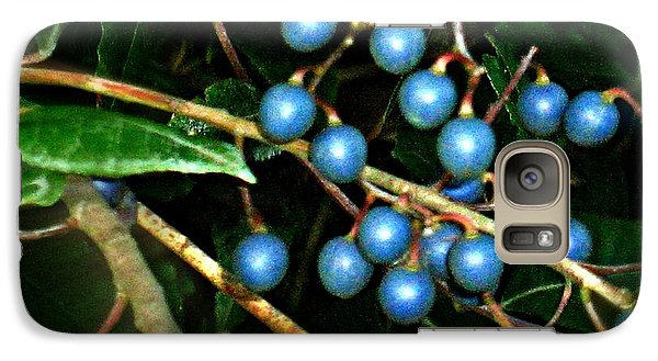 Galaxy Case featuring the photograph Blue Bush Berries  by Leanne Seymour