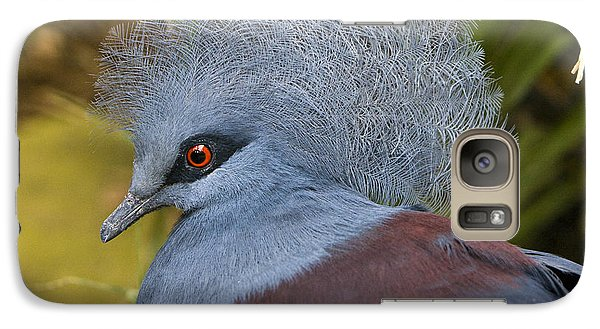 Galaxy Case featuring the photograph Blue-crowned Pigeon by David Millenheft